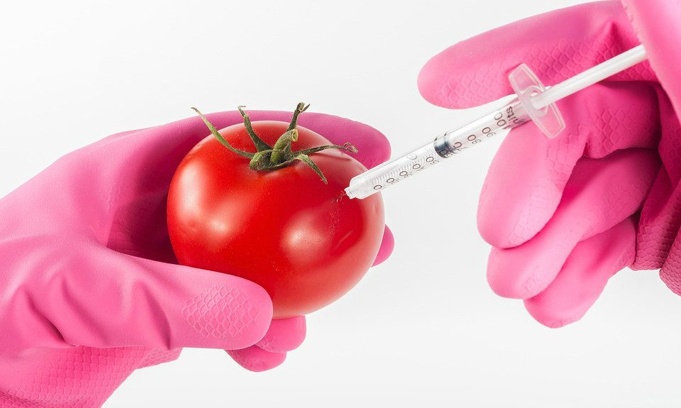 Science For Humans #1688: Genetically Modified Foods 101