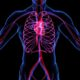 SFH 2144: Tricks & Supplements to Improve Vascular Health